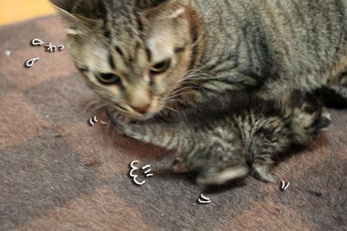 赤ちゃん猫★体重増えたよ!_d0355333_16485148.jpg