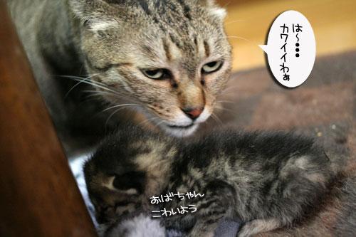 赤ちゃん猫★体重増えたよ!_d0355333_16485176.jpg