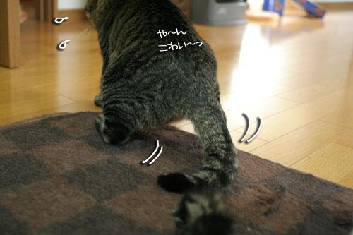 赤ちゃん猫★体重増えたよ!_d0355333_16485243.jpg
