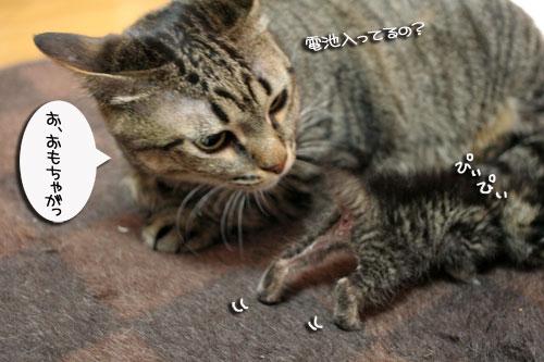 赤ちゃん猫★体重増えたよ!_d0355333_16485295.jpg