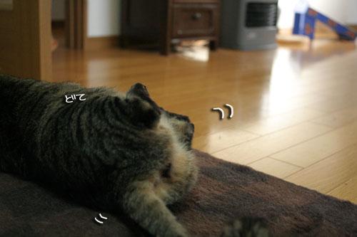 赤ちゃん猫★体重増えたよ!_d0355333_16485319.jpg