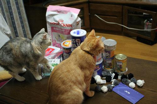 赤ちゃん猫★体重増えたよ!_d0355333_16485476.jpg