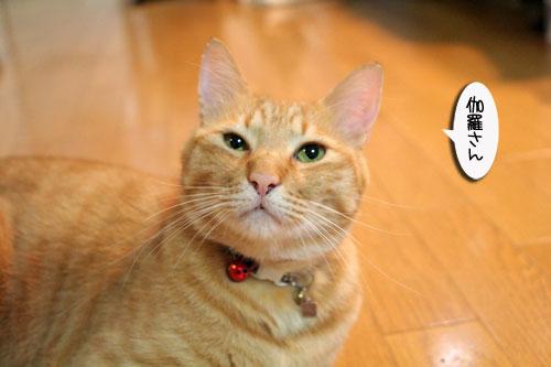 赤ちゃん猫★体重増えたよ!_d0355333_16485703.jpg
