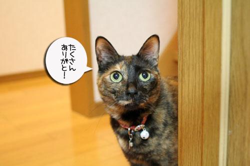 赤ちゃん猫★体重増えたよ!_d0355333_16485806.jpg