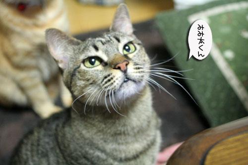 赤ちゃん猫★体重増えたよ!_d0355333_16485854.jpg