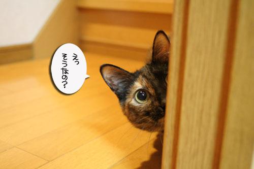 赤ちゃん猫★体重増えたよ!_d0355333_16485919.jpg