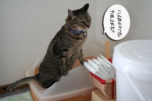 赤ちゃん猫★体重増えたよ!_d0355333_16485957.jpg