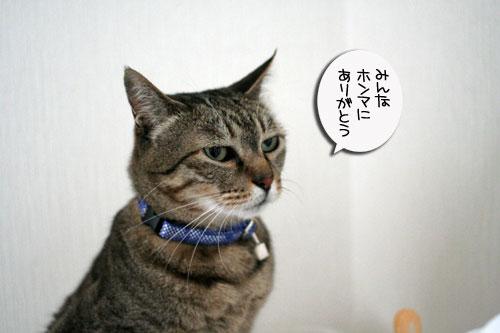 赤ちゃん猫★体重増えたよ!_d0355333_16485999.jpg