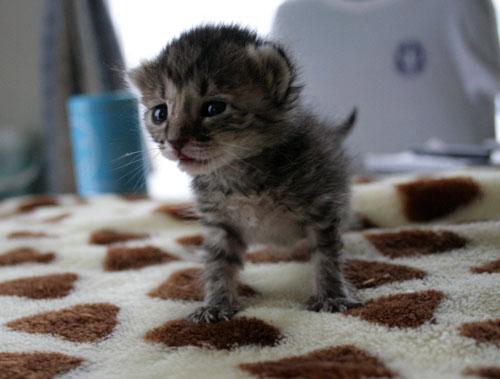 赤ちゃん猫★写真いっぱい!_d0355333_16491308.jpg