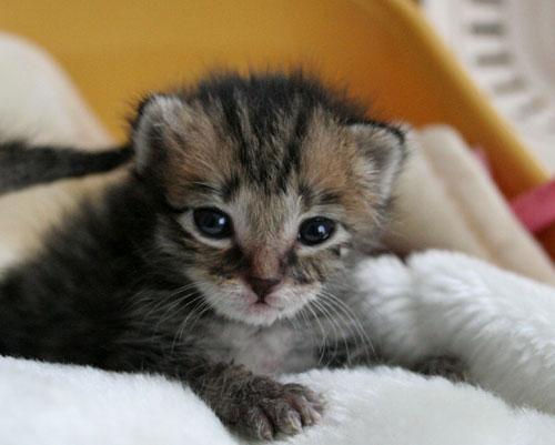 赤ちゃん猫★写真いっぱい!_d0355333_16491462.jpg