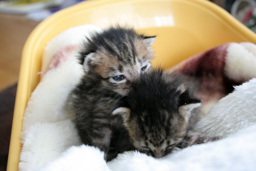 赤ちゃん猫★写真いっぱい!_d0355333_16491488.jpg