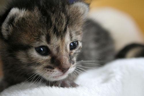赤ちゃん猫★写真いっぱい!_d0355333_16491537.jpg