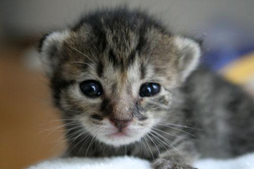 赤ちゃん猫★写真いっぱい!_d0355333_16491539.jpg