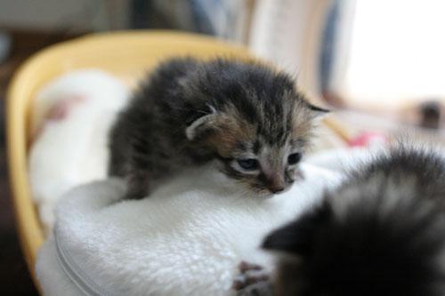 赤ちゃん猫★写真いっぱい!_d0355333_16491641.jpg