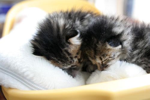 赤ちゃん猫★写真いっぱい!_d0355333_16491667.jpg