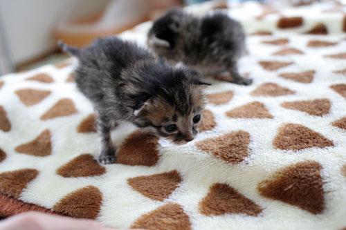 赤ちゃん猫★写真いっぱい!_d0355333_16491766.jpg