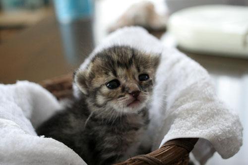 赤ちゃん猫★写真いっぱい!_d0355333_16491798.jpg