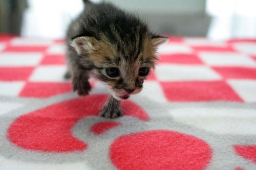赤ちゃん猫★写真いっぱい!_d0355333_16491816.jpg
