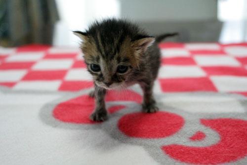 赤ちゃん猫★写真いっぱい!_d0355333_16491850.jpg