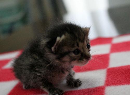 赤ちゃん猫★写真いっぱい!_d0355333_16491880.jpg