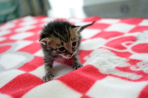 赤ちゃん猫★写真いっぱい!_d0355333_16491919.jpg