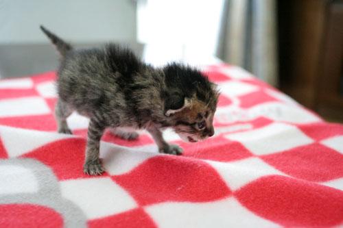 赤ちゃん猫★写真いっぱい!_d0355333_16491944.jpg