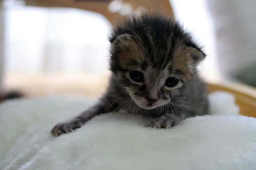 赤ちゃん猫★写真いっぱい!_d0355333_16492070.jpg