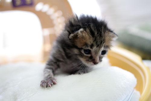 赤ちゃん猫★写真いっぱい!_d0355333_16492154.jpg