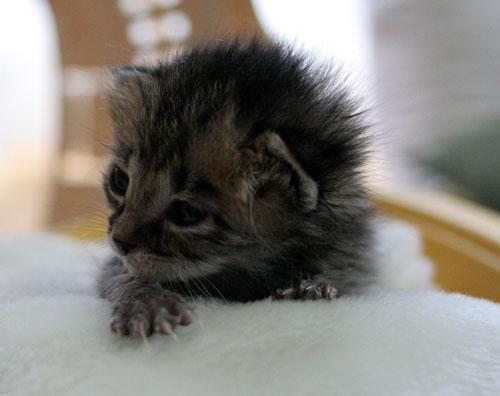 赤ちゃん猫★写真いっぱい!_d0355333_16492188.jpg