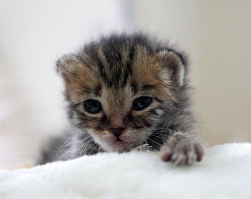 赤ちゃん猫★写真いっぱい!_d0355333_16492261.jpg
