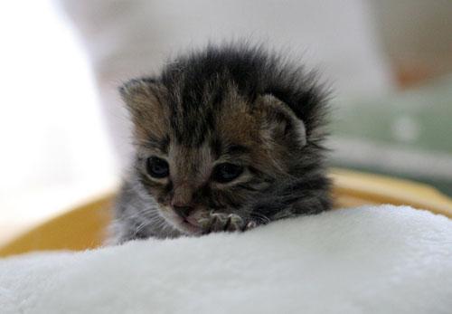 赤ちゃん猫★写真いっぱい!_d0355333_16492286.jpg