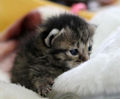 赤ちゃん猫★写真いっぱい!_d0355333_16492378.jpg