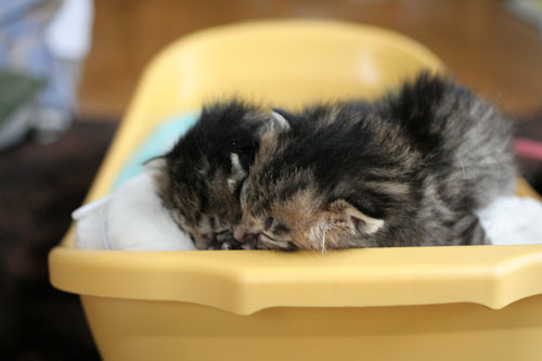 赤ちゃん猫★写真いっぱい!_d0355333_16492443.jpg