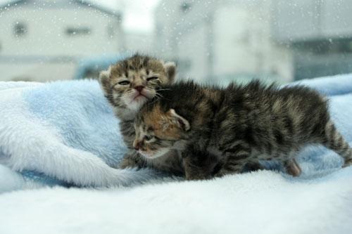 赤ちゃん猫★病院へ行く_d0355333_16492668.jpg