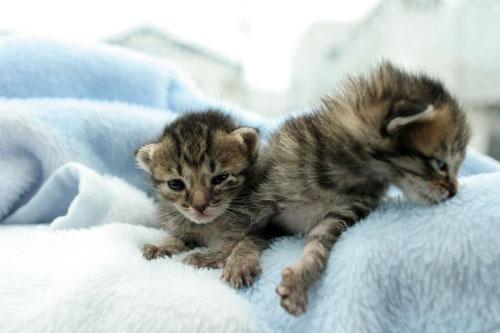 赤ちゃん猫★病院へ行く_d0355333_16492677.jpg