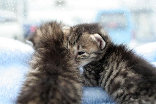 赤ちゃん猫★病院へ行く_d0355333_16492684.jpg