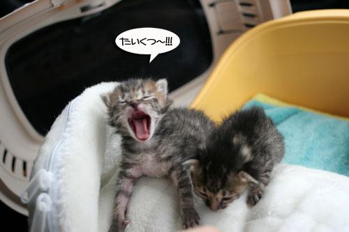 赤ちゃん猫★病院へ行く_d0355333_16492690.jpg