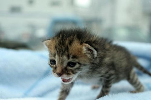 赤ちゃん猫★病院へ行く_d0355333_16492750.jpg