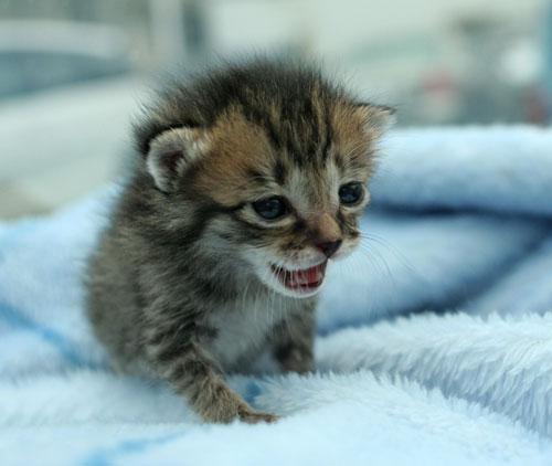 赤ちゃん猫★病院へ行く_d0355333_16492751.jpg