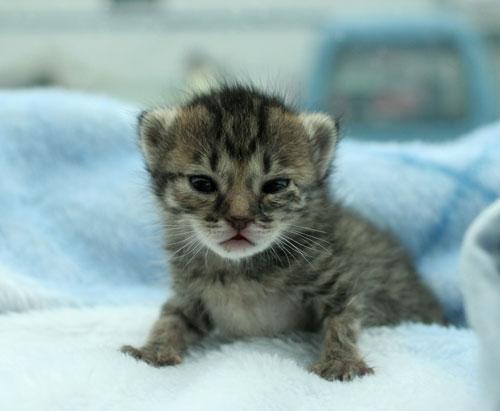 赤ちゃん猫★病院へ行く_d0355333_16492775.jpg