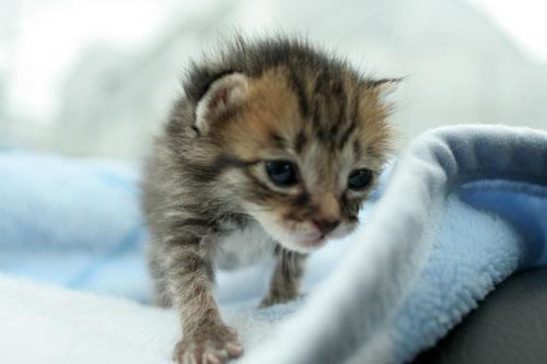 赤ちゃん猫★病院へ行く_d0355333_16492890.jpg