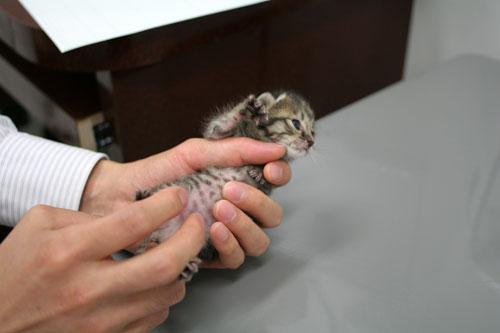 赤ちゃん猫★病院へ行く_d0355333_16492908.jpg