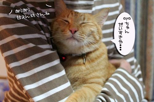 赤ちゃん猫★ミルクがおいしいね_d0355333_16493063.jpg