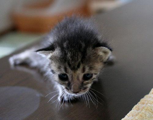 赤ちゃん猫★ミルクがおいしいね_d0355333_16493590.jpg
