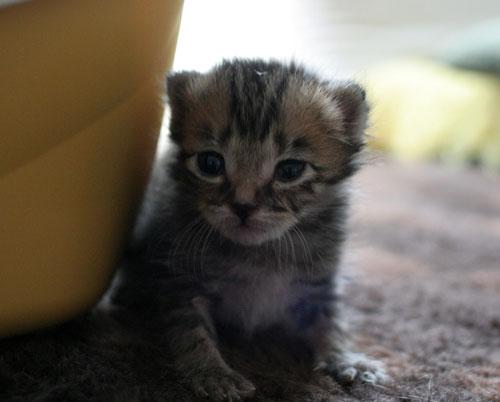 赤ちゃん猫★ミルクがおいしいね_d0355333_16493605.jpg