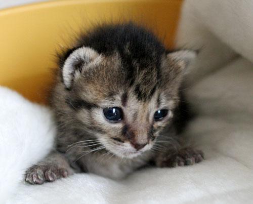 赤ちゃん猫★ミルクがおいしいね_d0355333_16493693.jpg
