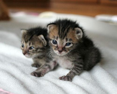 赤ちゃん猫★2匹揃って♪_d0355333_16493842.jpg