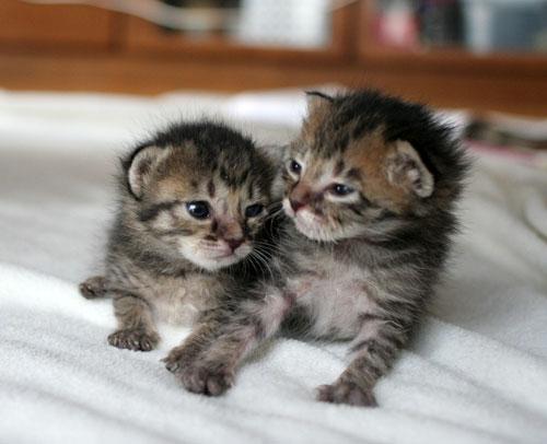 赤ちゃん猫★2匹揃って♪_d0355333_16493922.jpg