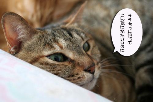 赤ちゃん猫★2匹揃って♪_d0355333_16493989.jpg