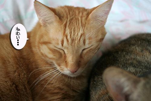 赤ちゃん猫★2匹揃って♪_d0355333_16494003.jpg